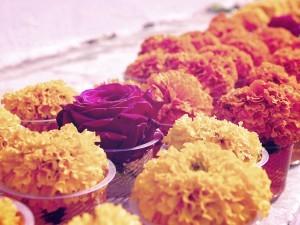 Recueillement : Comment harmoniser le fleurissement des columbariums et de votre espace cinéraire ?